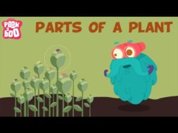 Parts Of A Plant.