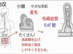 【中学2年・理科 3-3】吸収