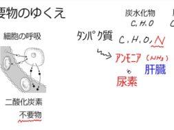【中学2年・理科 3-4】排出