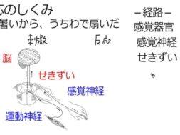 【中学2年・理科 4-3】刺激と反応