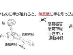 【中学2年・理科 4-4】反射
