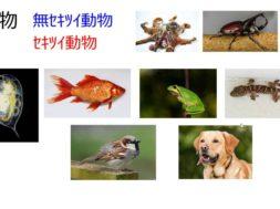 【中学2年・理科 5-1】セキツイ動物の特徴