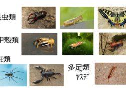 【中学2年・理科 5-3】節足動物