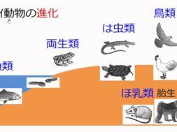 【中学2年・理科 5-4】生物の進化