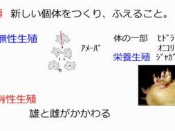 【中学3年・理科 1-5】植物の有性生殖