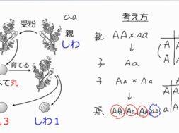 【中学3年・理科 2-4】遺伝 練習問題