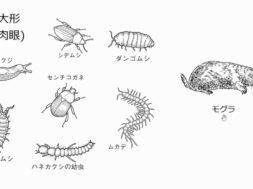 【中学3年・理科 3-2】土の中の小動物