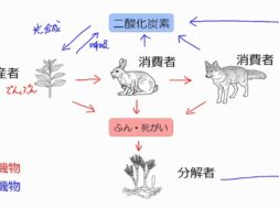 【中学3年・理科 3-4】炭素、窒素の循環