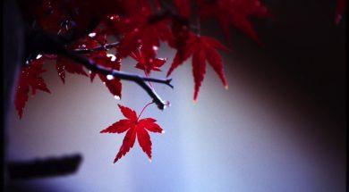 紅葉をキレイに撮るための6つのテクニック