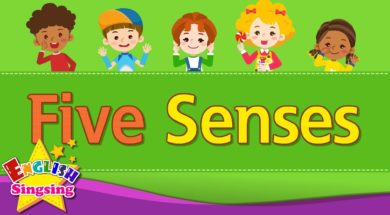 Kids vocabulary – Five Senses – Learn English for kids