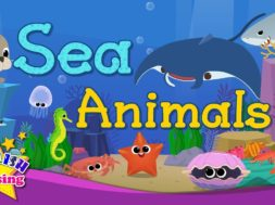 Kids vocabulary – Sea Animals