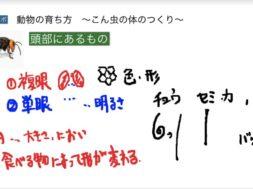 【小学校3年理科 1-1-5】こん虫の体のつくり