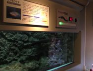 ★電気うなぎのクリスマスツリー点灯(しながわ水族館)★