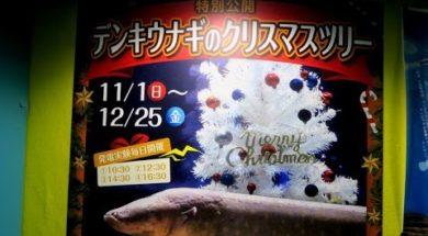 電気うなぎのクリスマスツリー点灯【サンピアザ水族館(札幌)】
