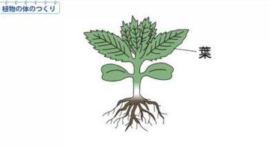 小3理科 植物の体のつくり