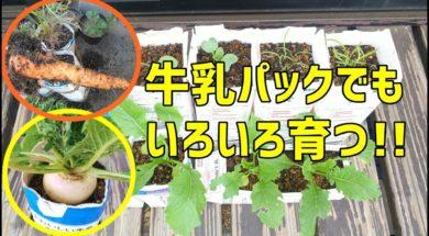 牛乳パックでいろんな野菜を育ててみてほしい!